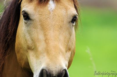 Horsey Face by Norm 2014.jpg